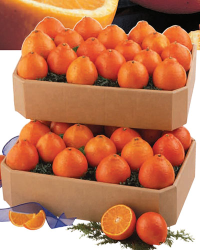 Honeybells &  Ruby Red Grapefruit (30 lbs.)