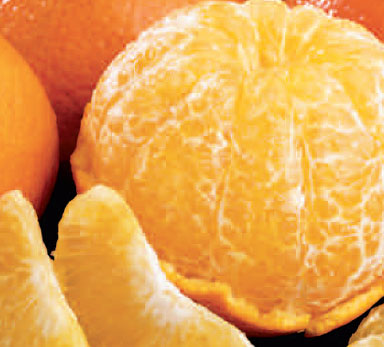 Temple Oranges (10 lbs.)